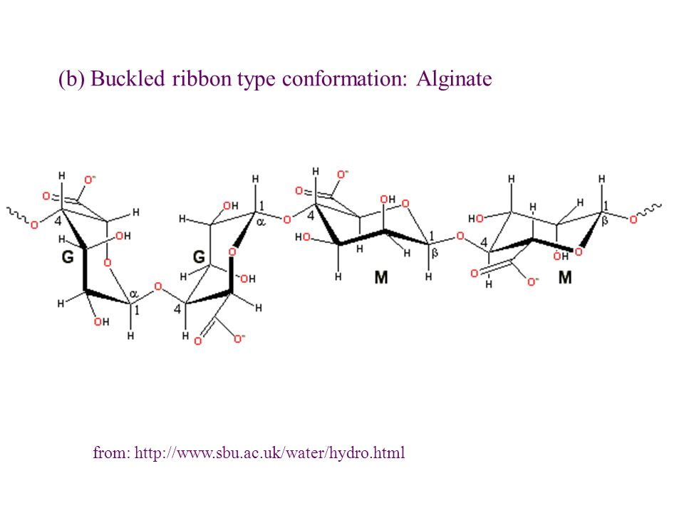 (b) Buckled ribbon type conformation: Alginate