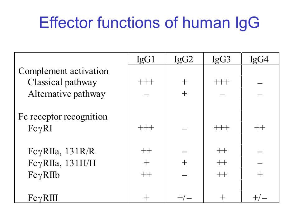 Effector functions of human IgG