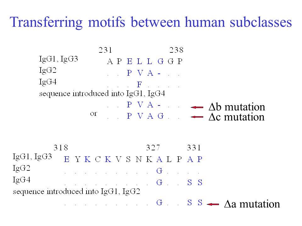 Transferring motifs between human subclasses