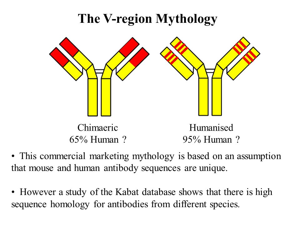 The V-region Mythology