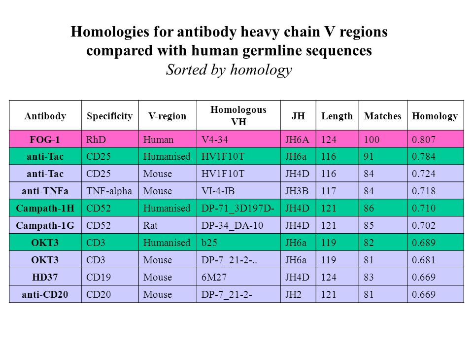 Homologies for antibody heavy chain V regions