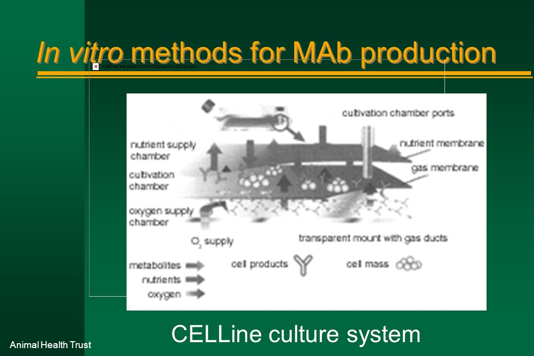 In vitro methods for MAb production