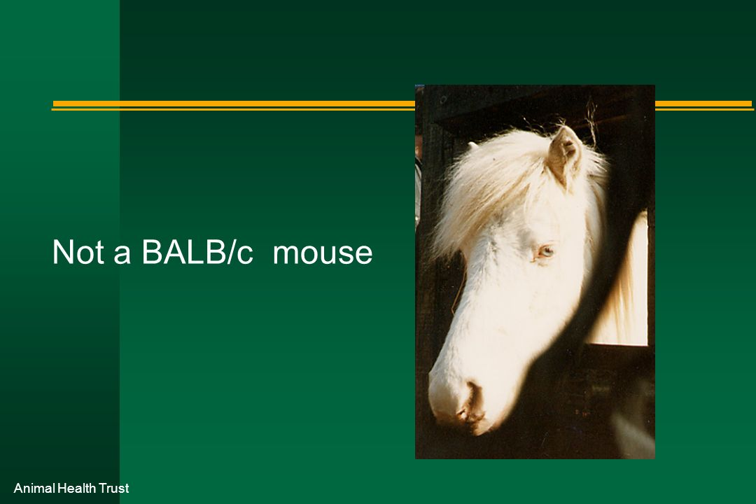 Not a BALB/c mouse