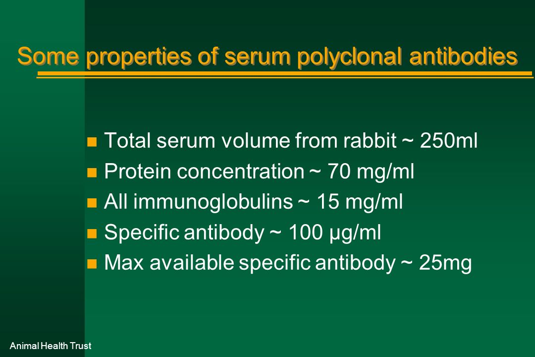 Some properties of serum polyclonal antibodies