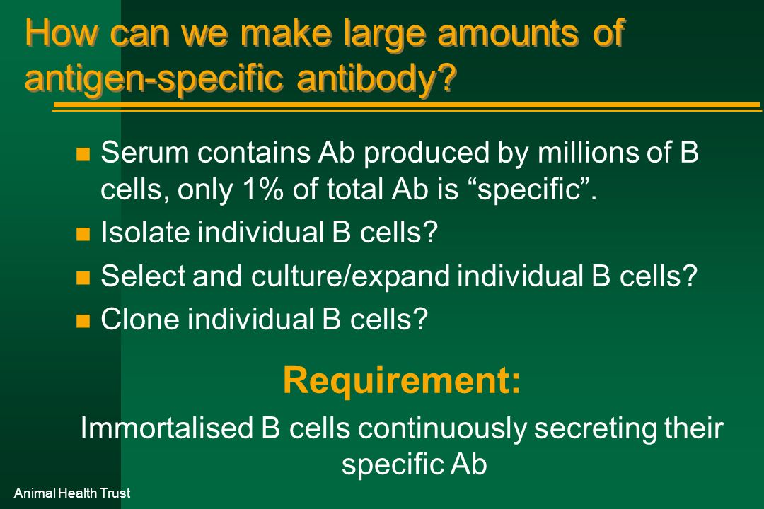 How can we make large amounts of antigen-specific antibody