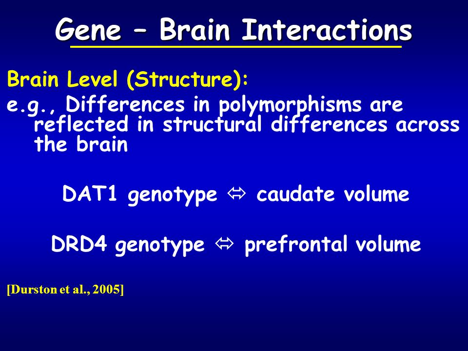 Gene – Brain Interactions