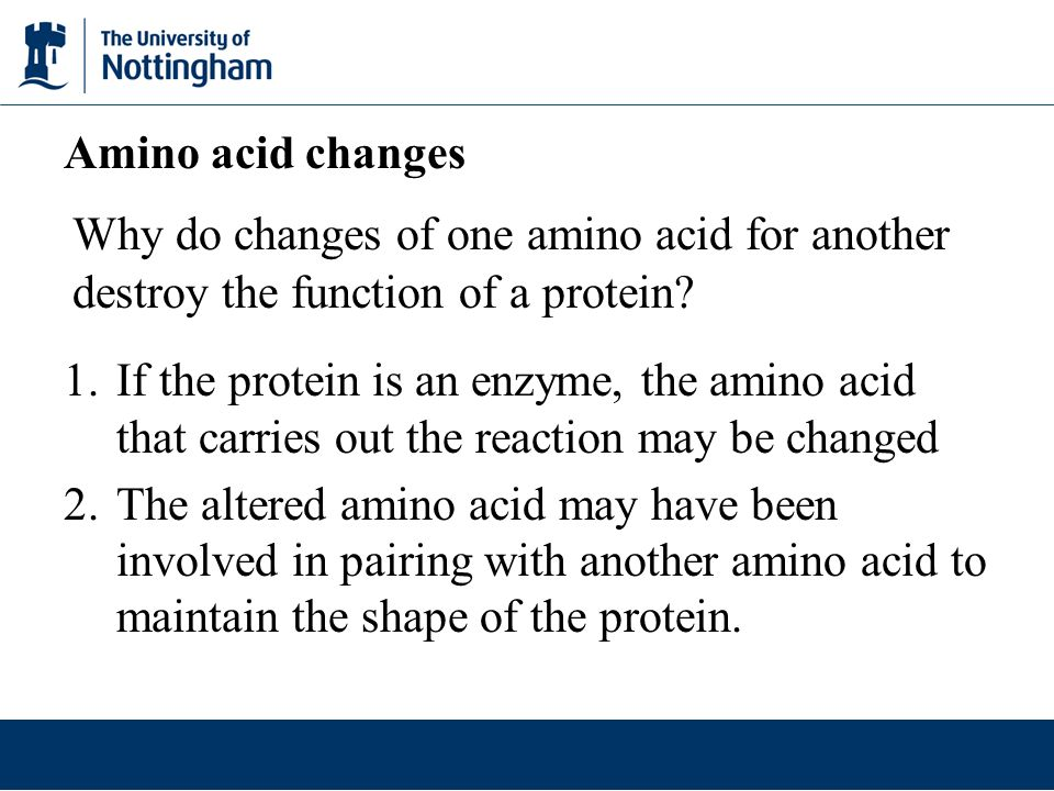 Amino acid changes Why do changes of one amino acid for another destroy the function of a protein