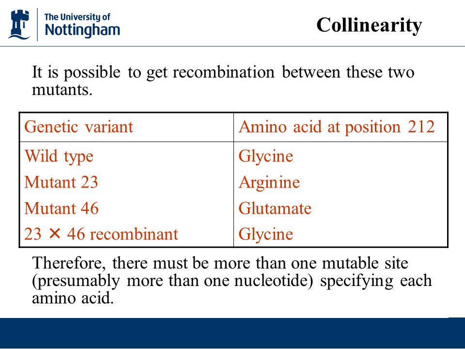 Collinearity It is possible to get recombination between these two mutants.