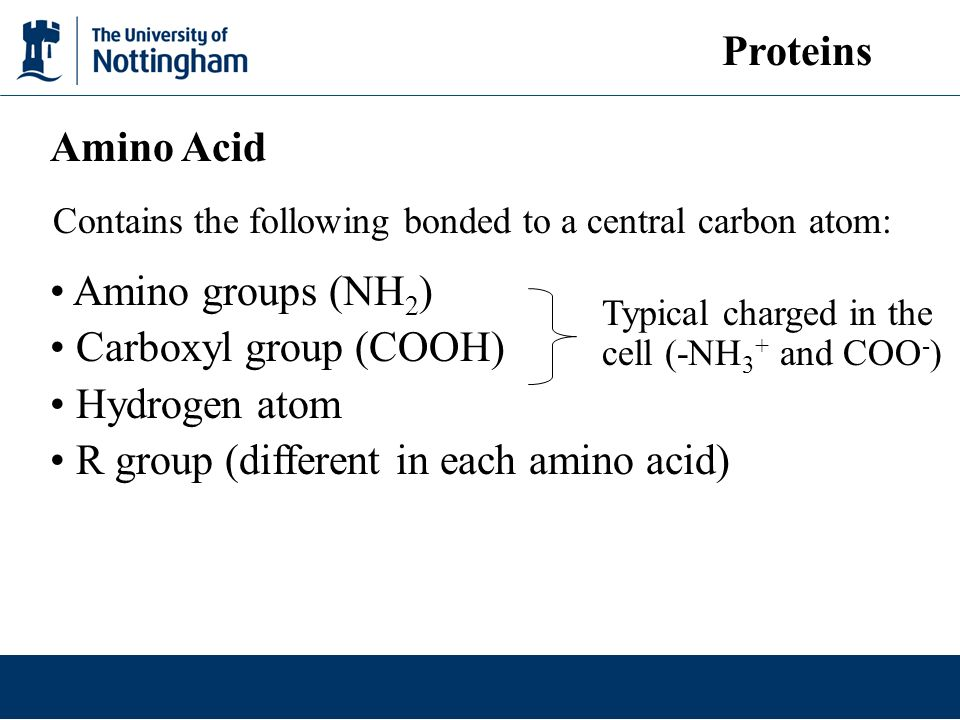 Contains the following bonded to a central carbon atom: