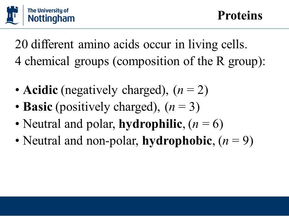 Proteins 20 different amino acids occur in living cells. 4 chemical groups (composition of the R group):