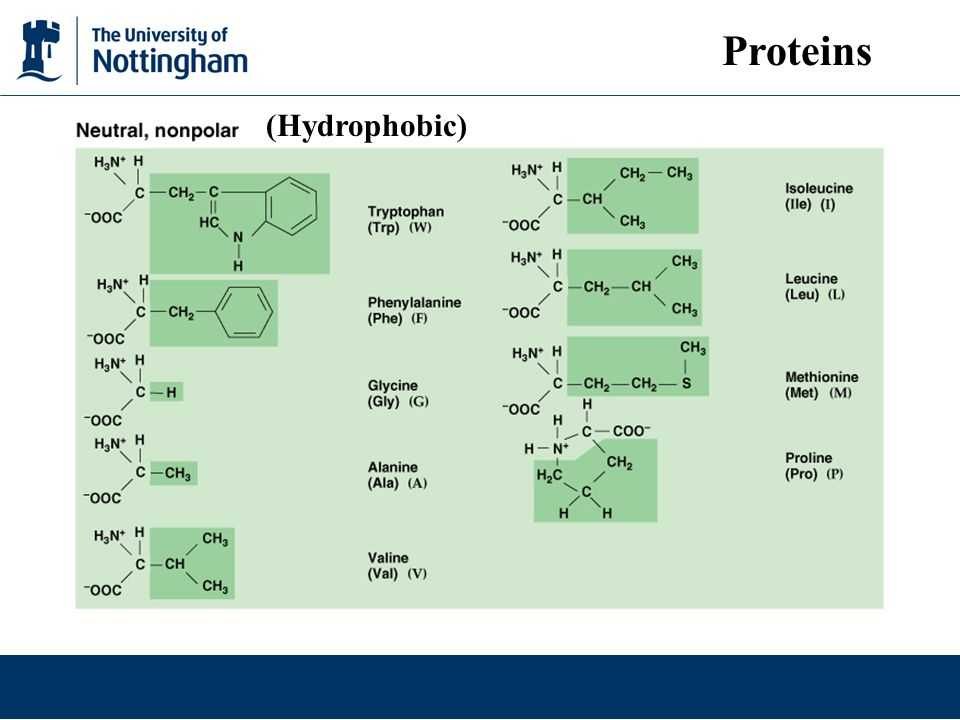 Proteins (Hydrophobic)