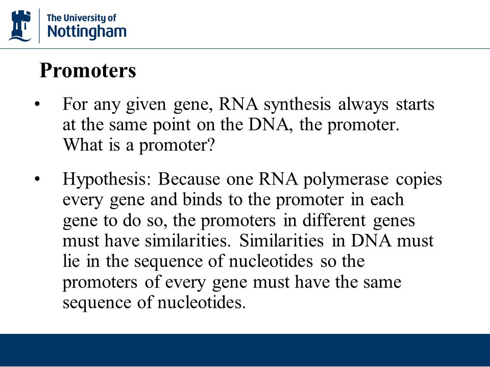Promoters For any given gene, RNA synthesis always starts at the same point on the DNA, the promoter. What is a promoter