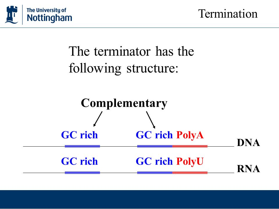 The terminator has the following structure: