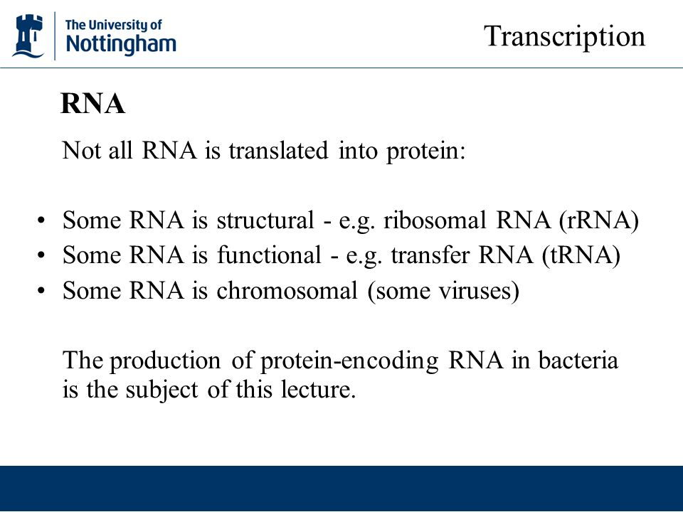 Transcription RNA Not all RNA is translated into protein: