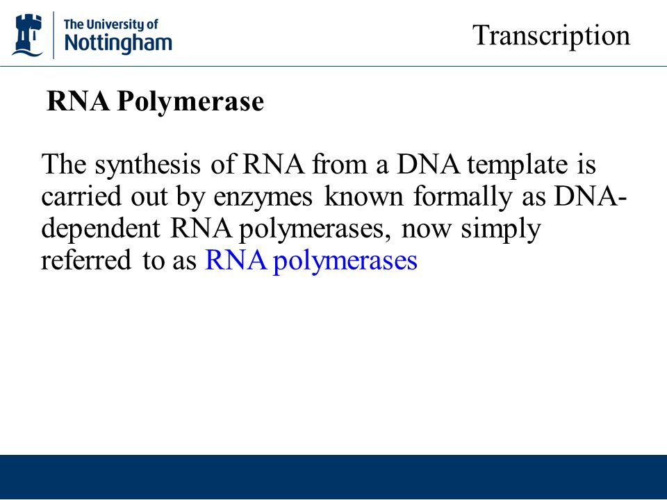 Transcription RNA Polymerase.