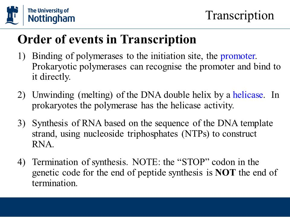 Order of events in Transcription