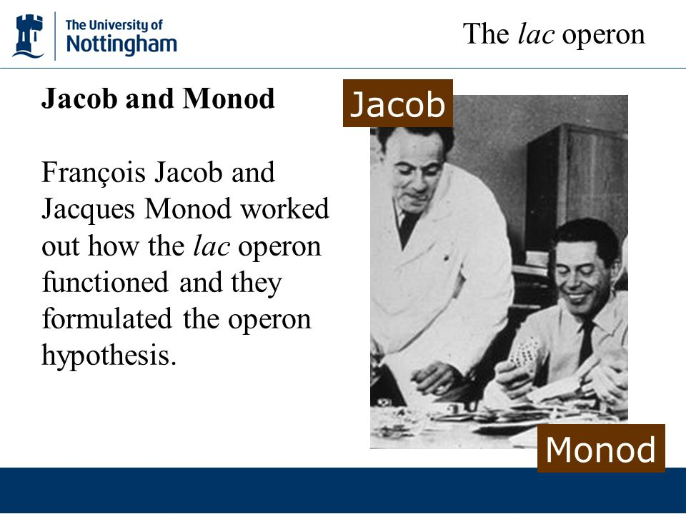 Jacob Monod The lac operon Jacob and Monod