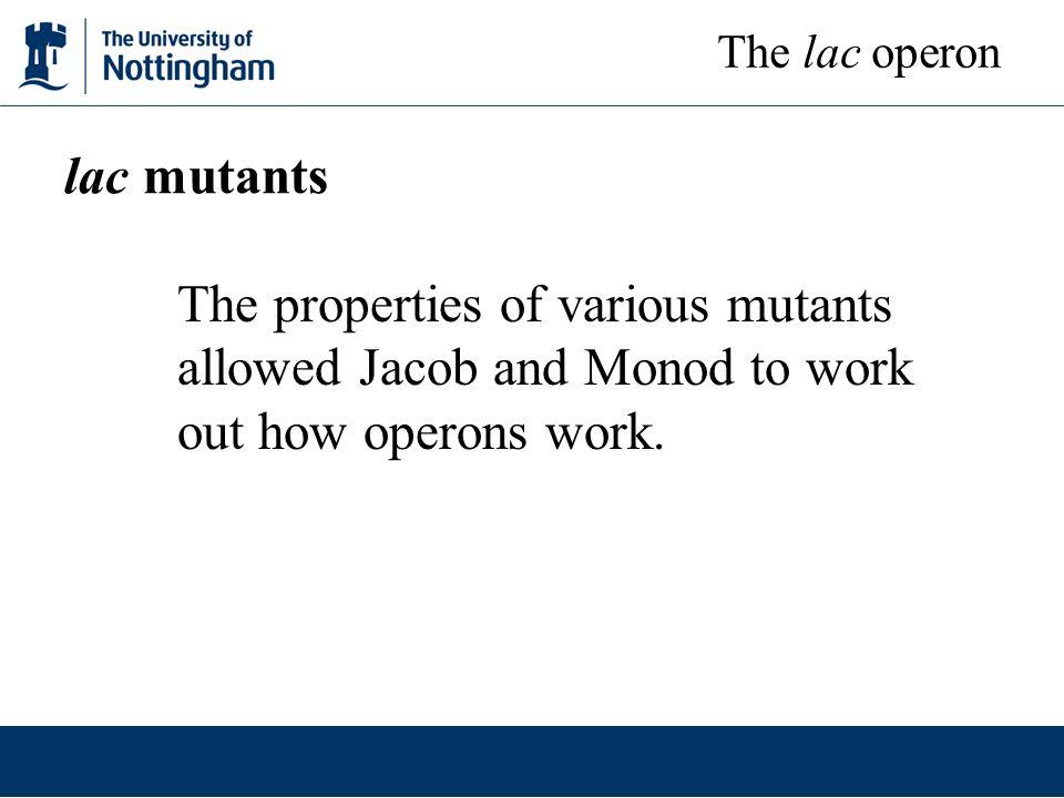 The lac operon lac mutants.