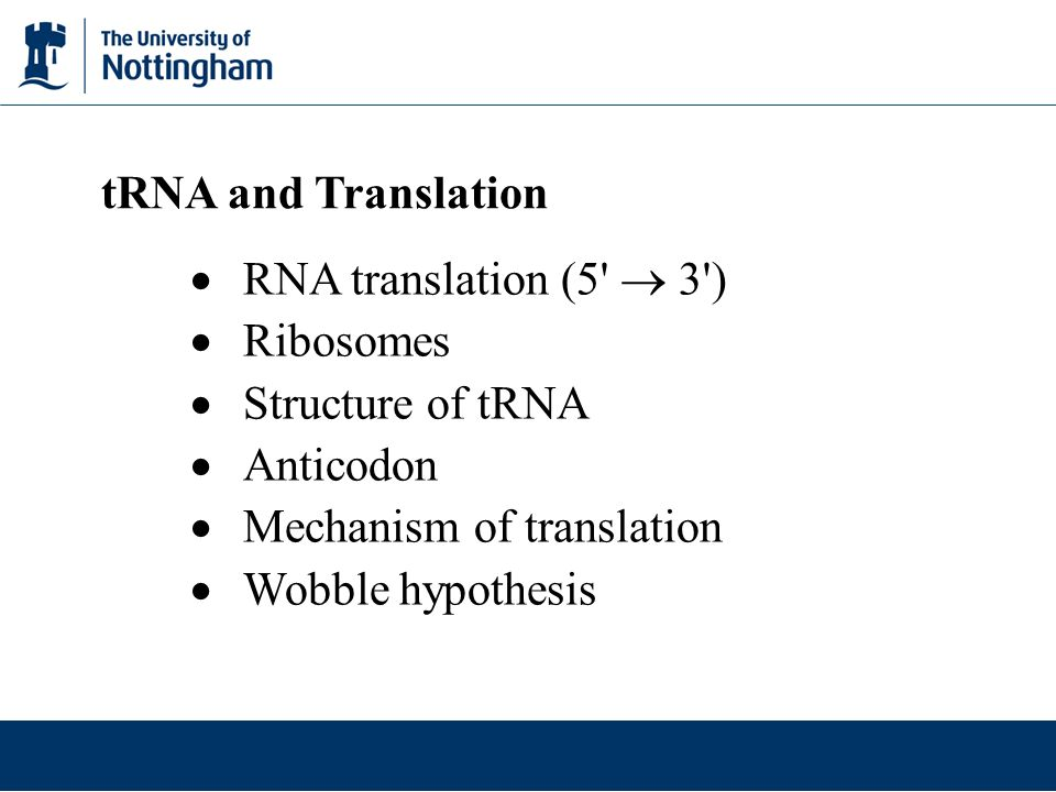 tRNA and Translation RNA translation (5  3 ) Ribosomes. Structure of tRNA. Anticodon. Mechanism of translation.