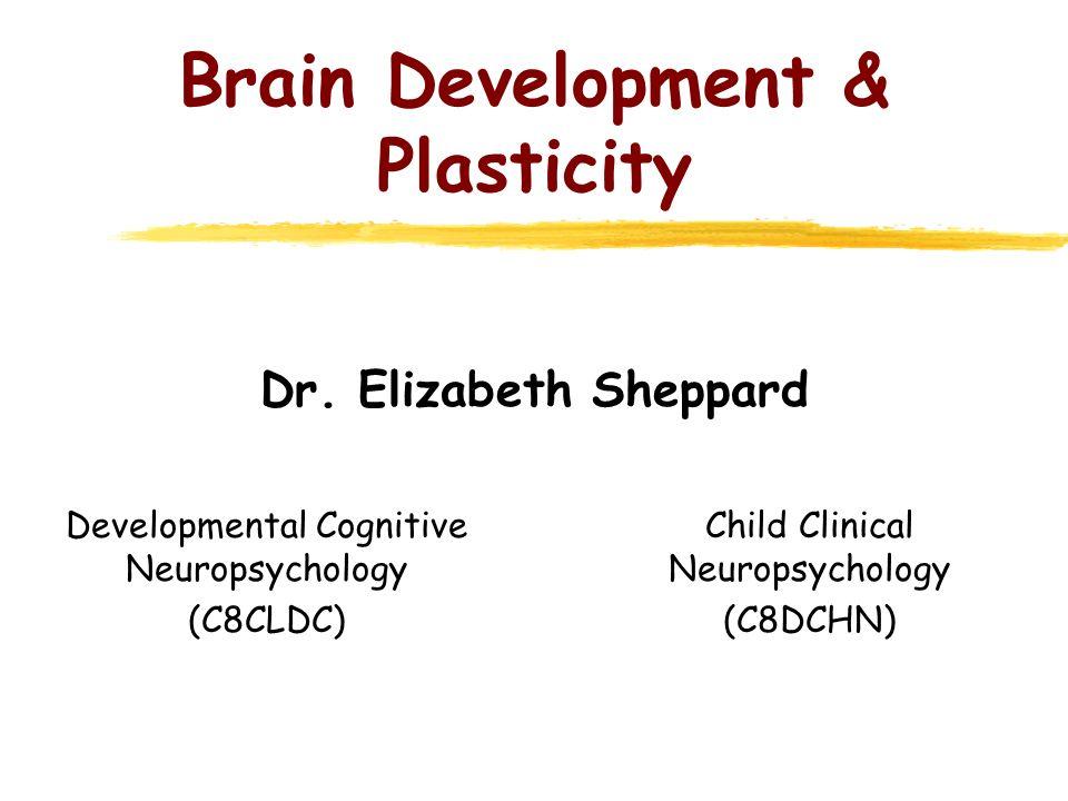 Brain Development & Plasticity