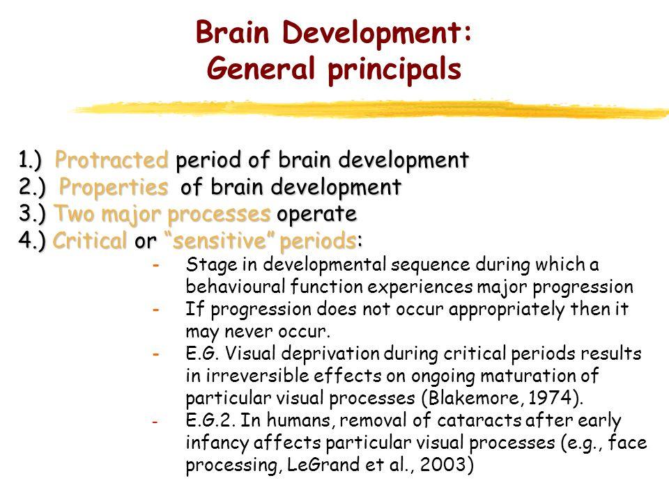 Boost brain supplement