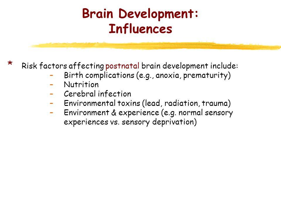 Brain Development: Influences