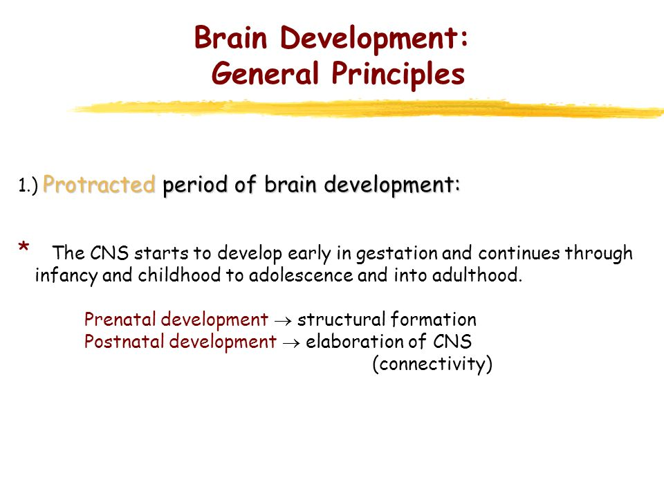 Brain Development: General Principles
