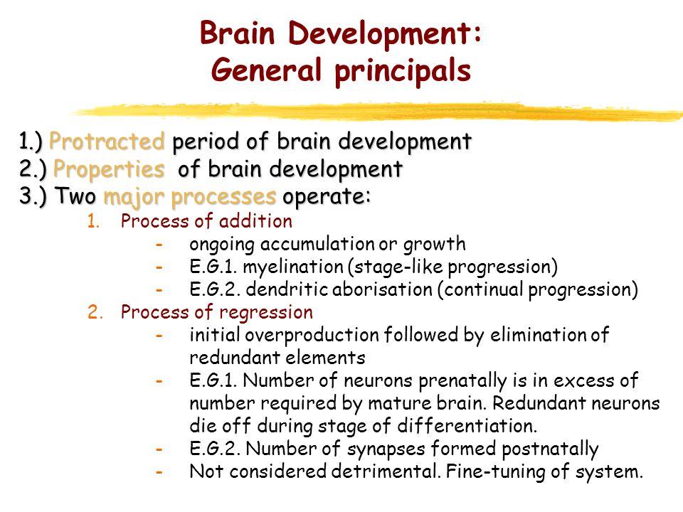 Brain Development: General principals