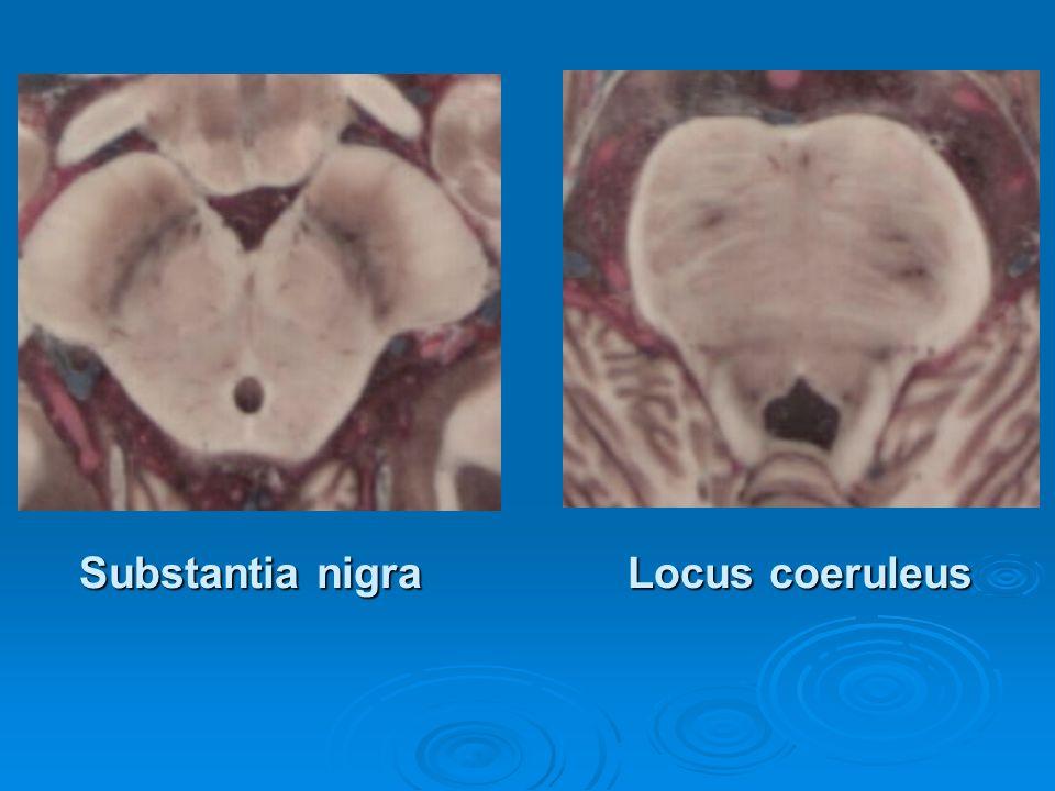 Substantia nigra Locus coeruleus