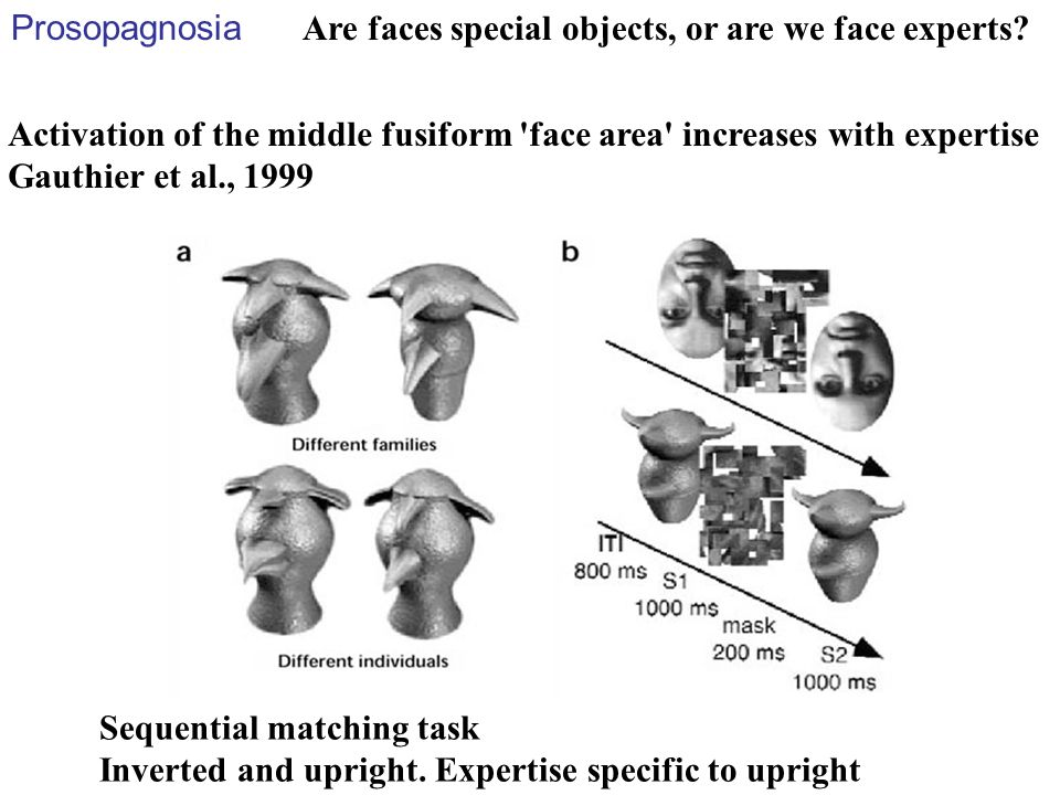 Prosopagnosia Are faces special objects, or are we face experts Activation of the middle fusiform face area increases with expertise