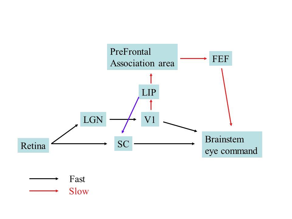 PreFrontal Association area FEF LIP LGN V1 Brainstem eye command Retina SC Fast Slow