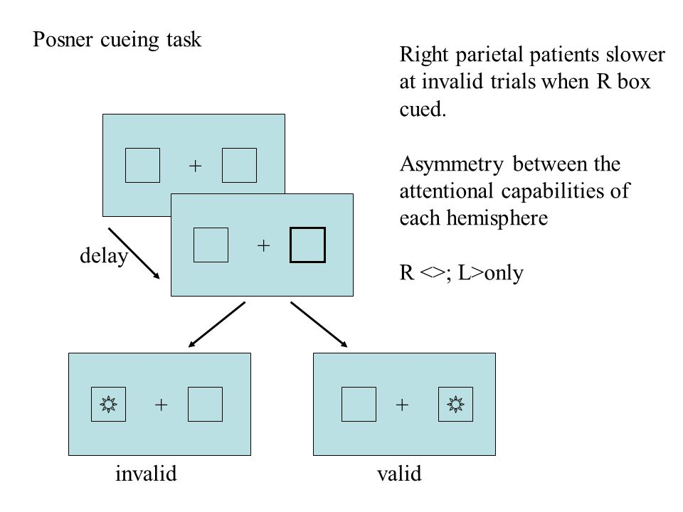Posner cueing task Right parietal patients slower at invalid trials when R box cued.