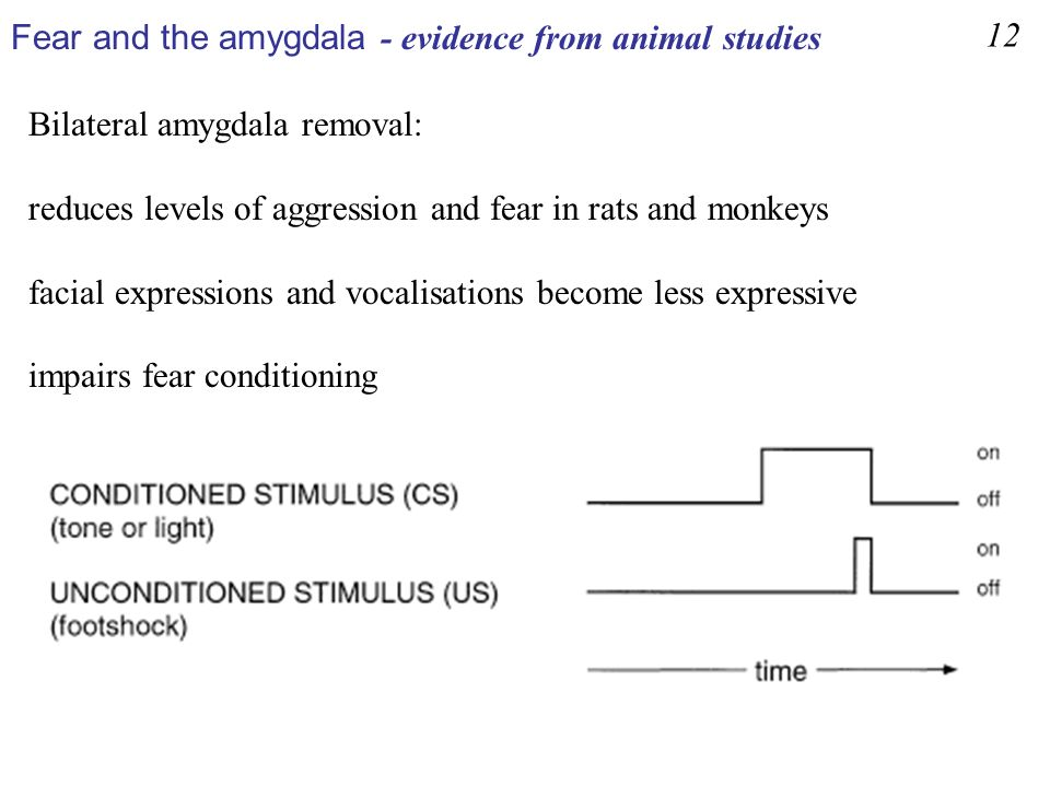 Fear and the amygdala - evidence from animal studies