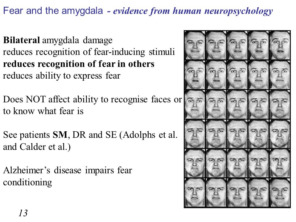 Fear and the amygdala - evidence from human neuropsychology