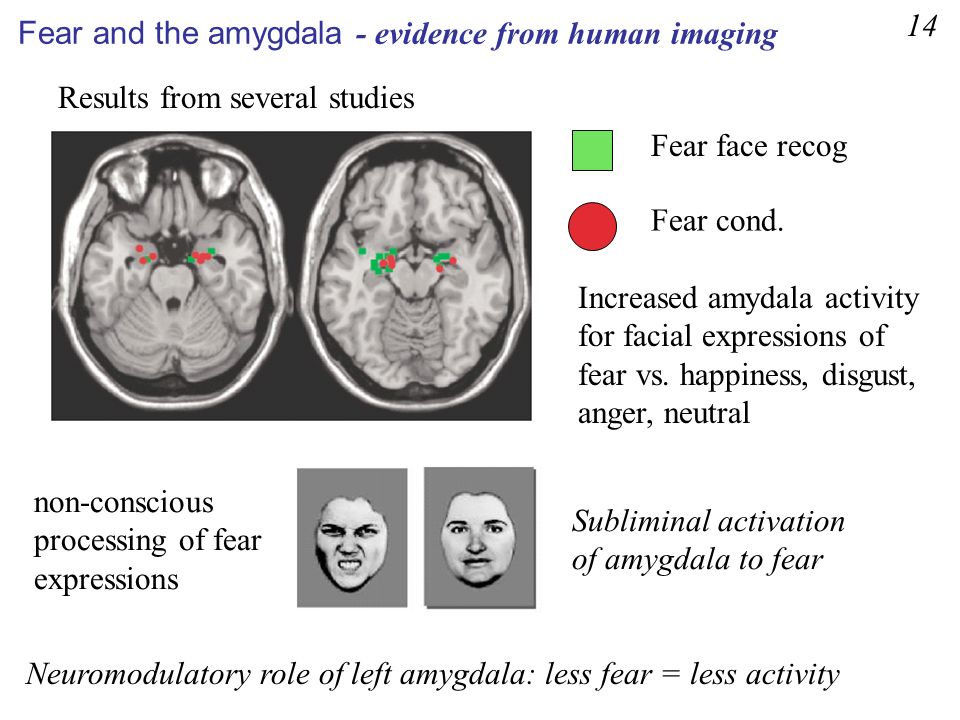 14 Fear and the amygdala - evidence from human imaging. Results from several studies. Fear face recog.