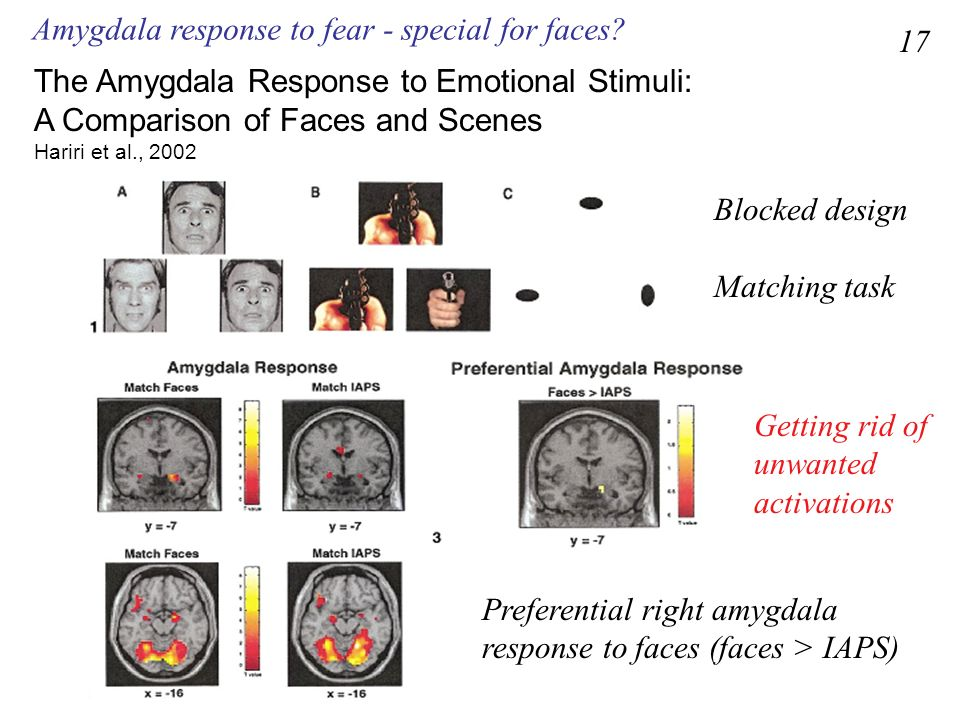 Amygdala response to fear - special for faces 17