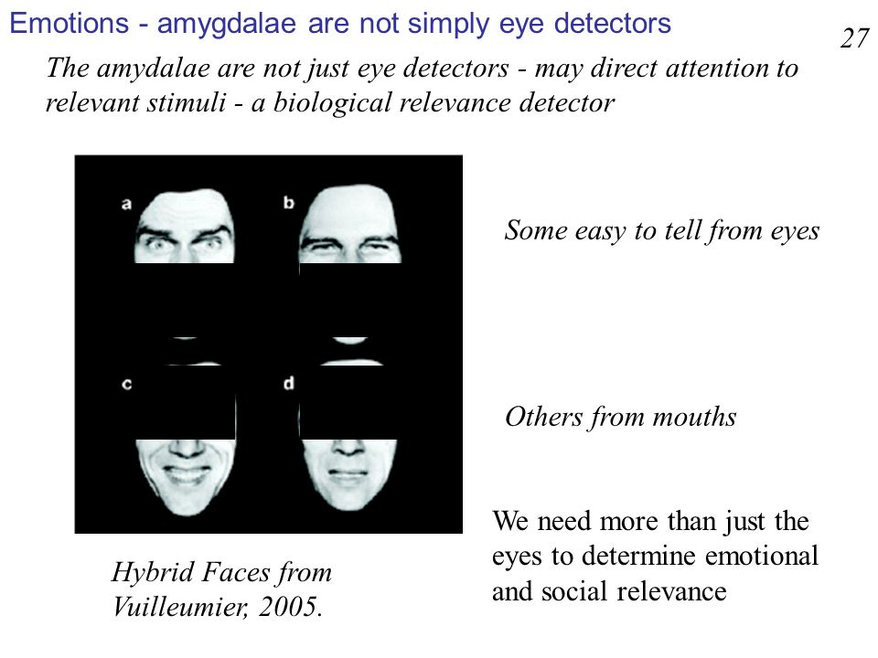 Emotions - amygdalae are not simply eye detectors