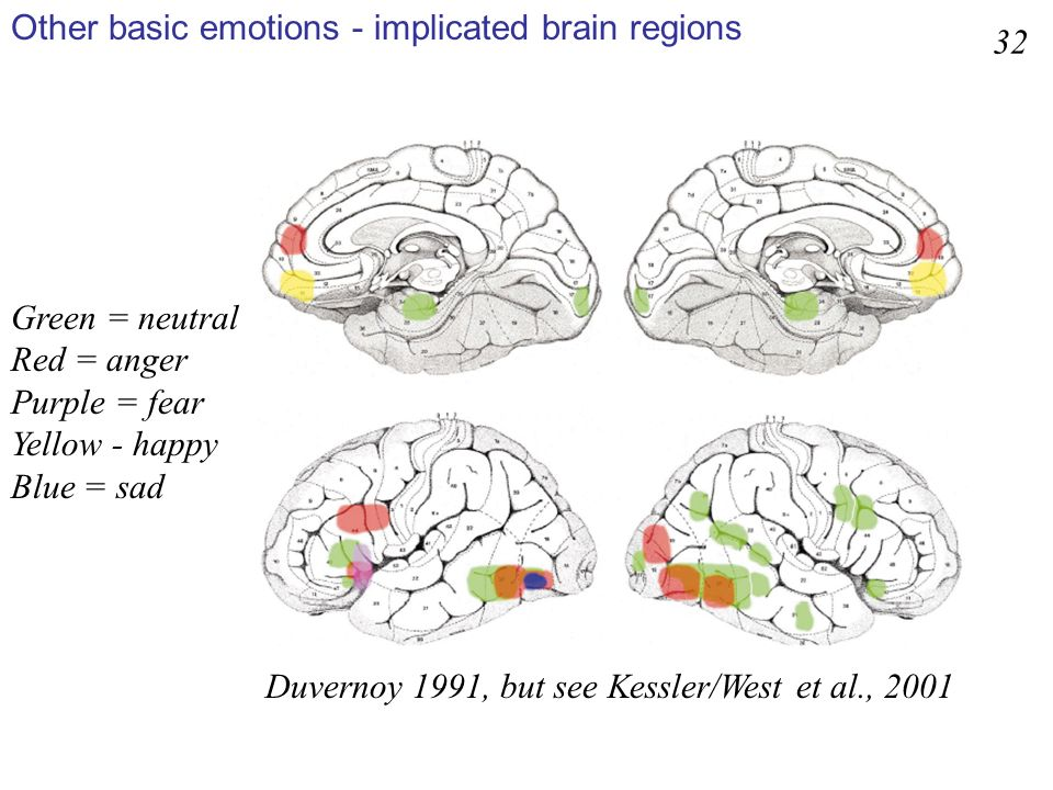 Other basic emotions - implicated brain regions