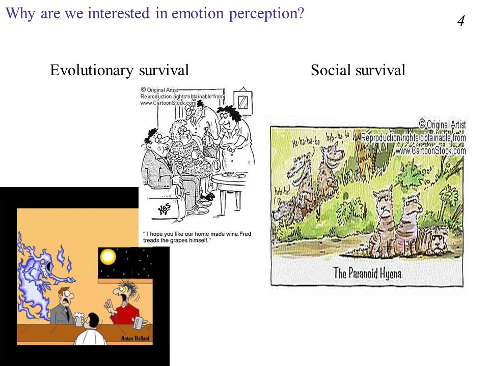 Why are we interested in emotion perception