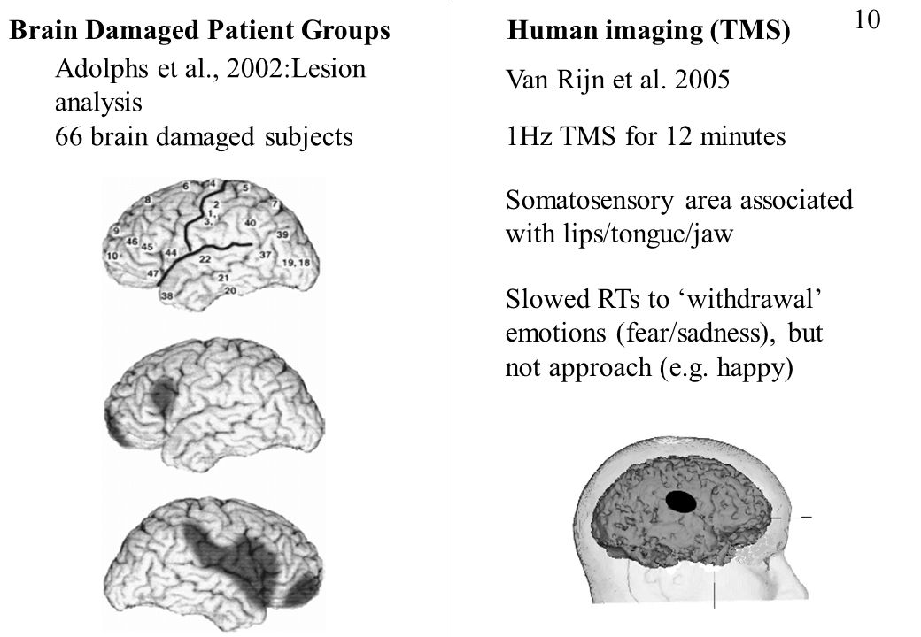 10 Brain Damaged Patient Groups. Human imaging (TMS) Adolphs et al., 2002:Lesion analysis. 66 brain damaged subjects.
