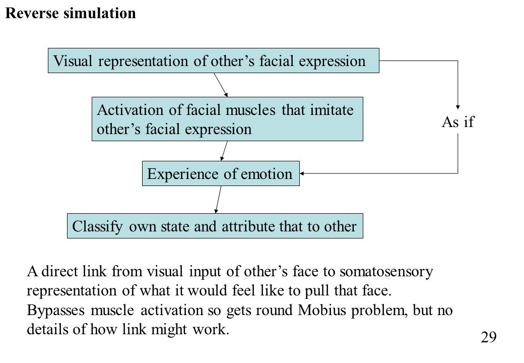 Reverse simulation Visual representation of other's facial expression. Activation of facial muscles that imitate other's facial expression.