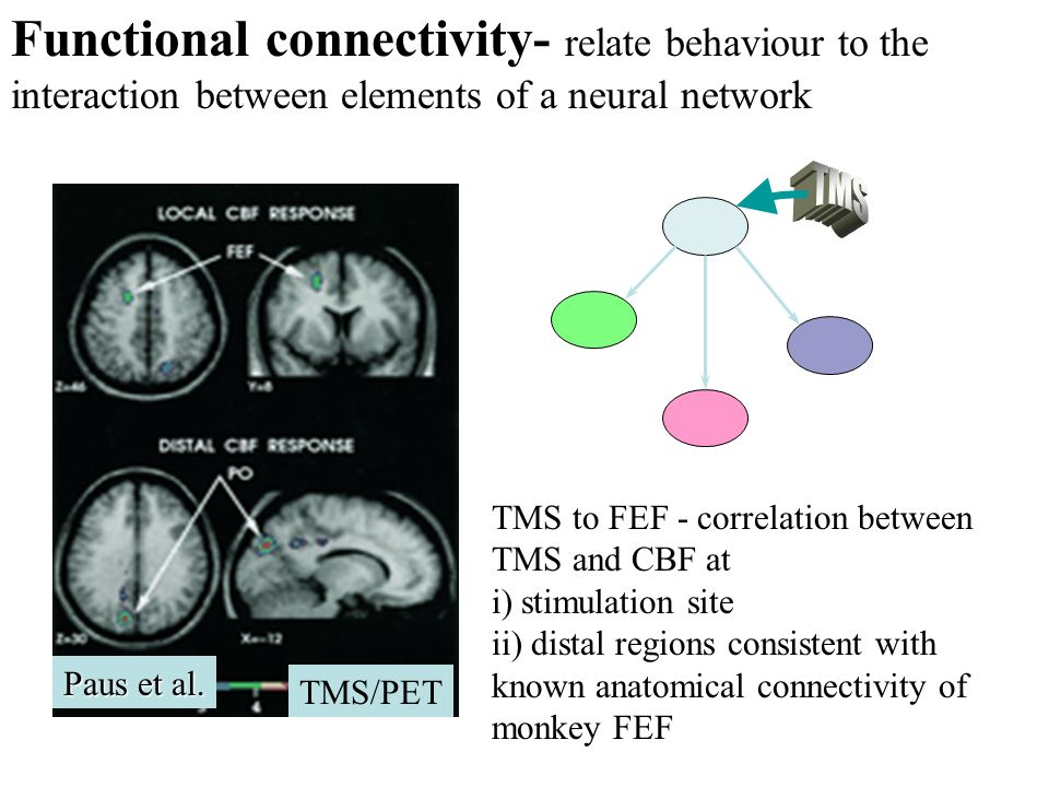Functional connectivity- relate behaviour to the interaction between elements of a neural network
