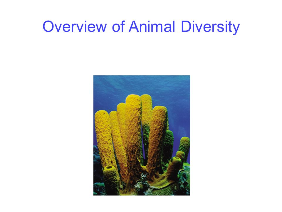 an overview of the animal species