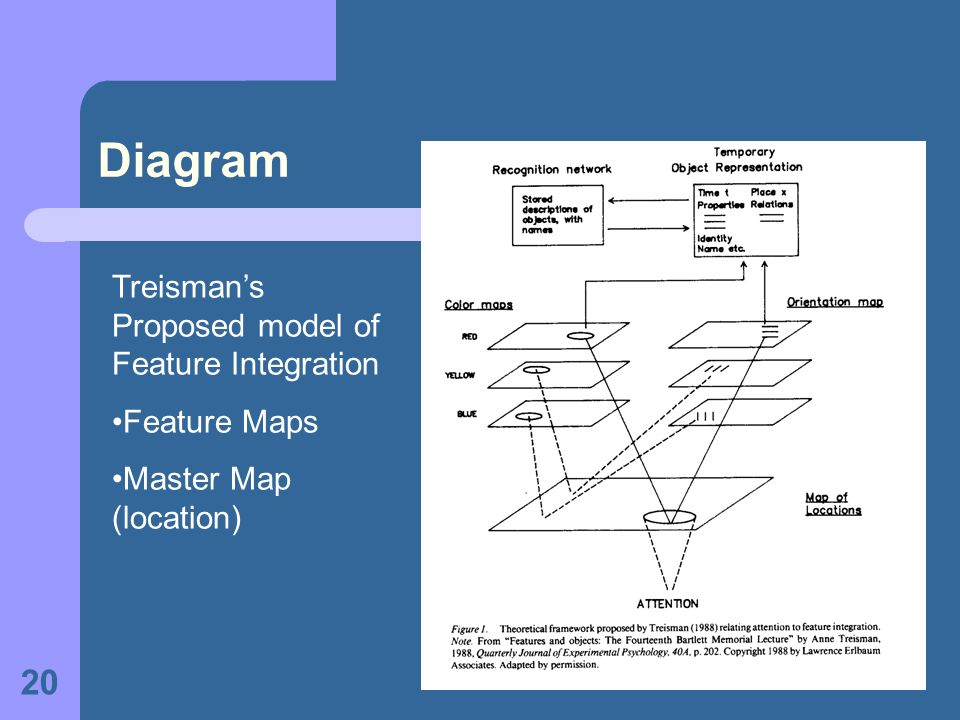 Diagram Treisman's Proposed model of Feature Integration Feature Maps
