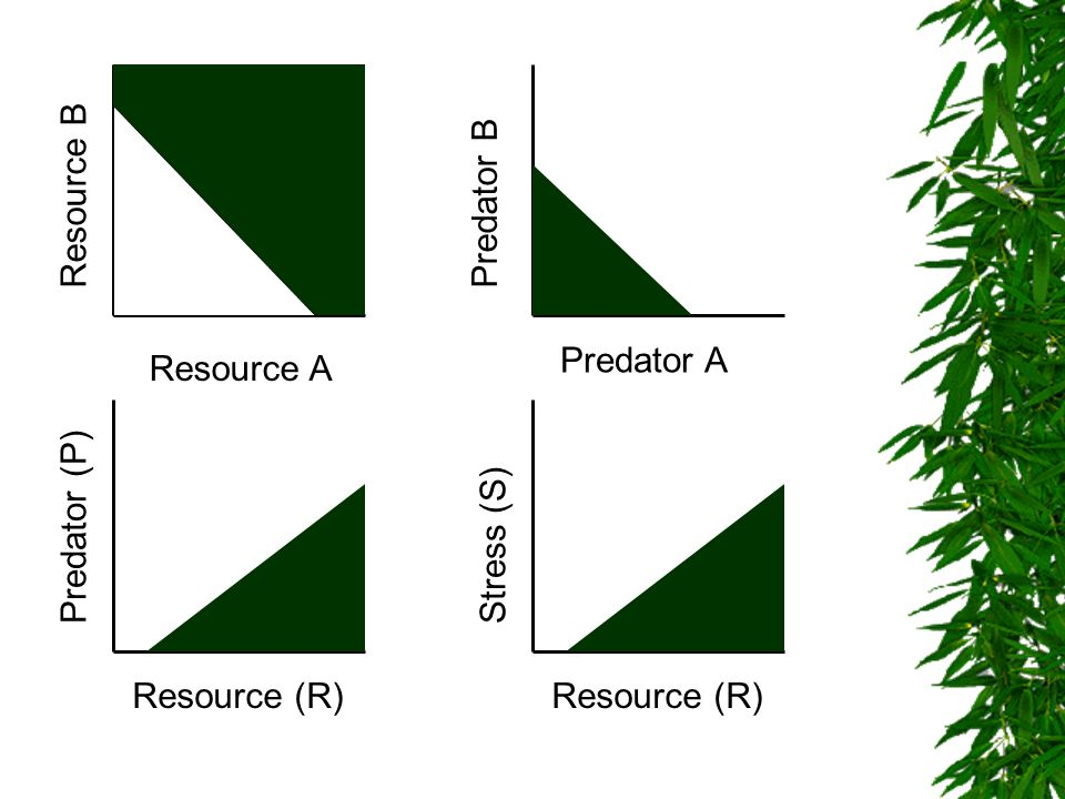 Resource B Predator B Predator A Resource A Predator (P) Stress (S) Resource (R) Resource (R)
