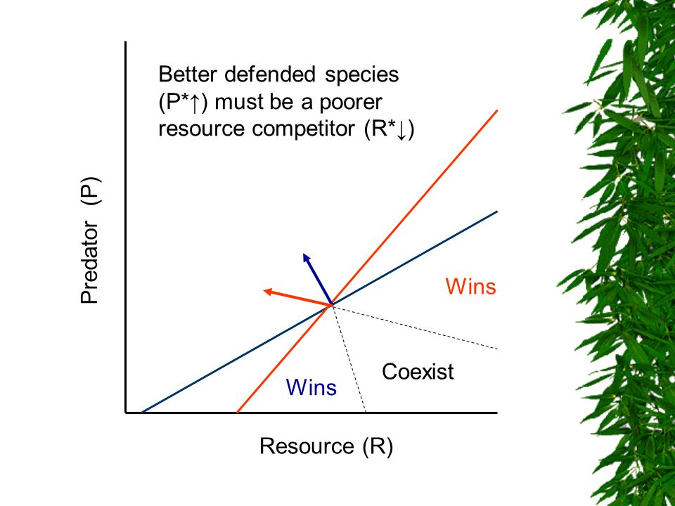 Better defended species (P. ↑) must be a poorer resource competitor (R
