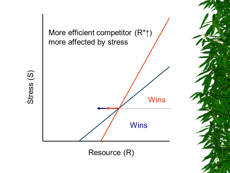 More efficient competitor (R*↑) more affected by stress