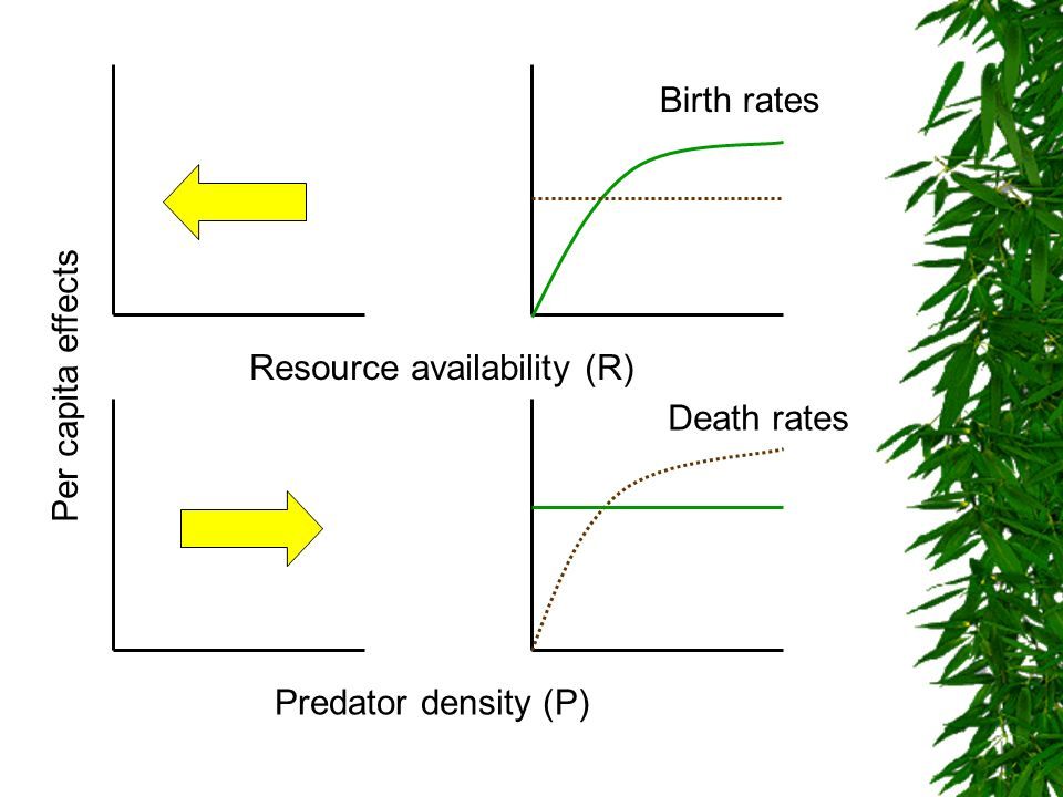 Birth rates Resource availability (R) Per capita effects Death rates Predator density (P)
