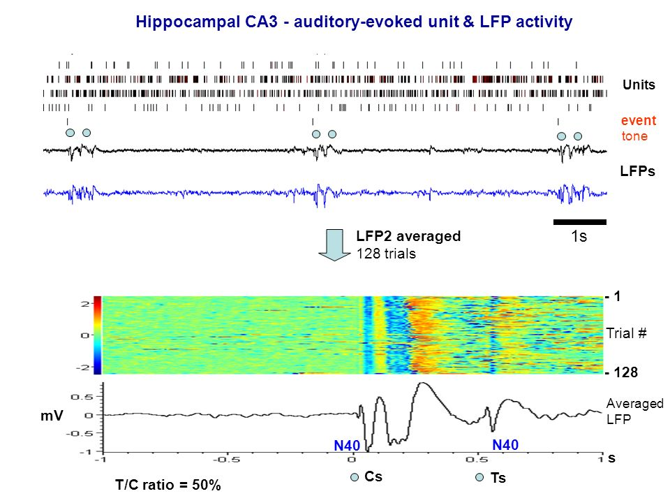 Hippocampal CA3 - auditory-evoked unit & LFP activity