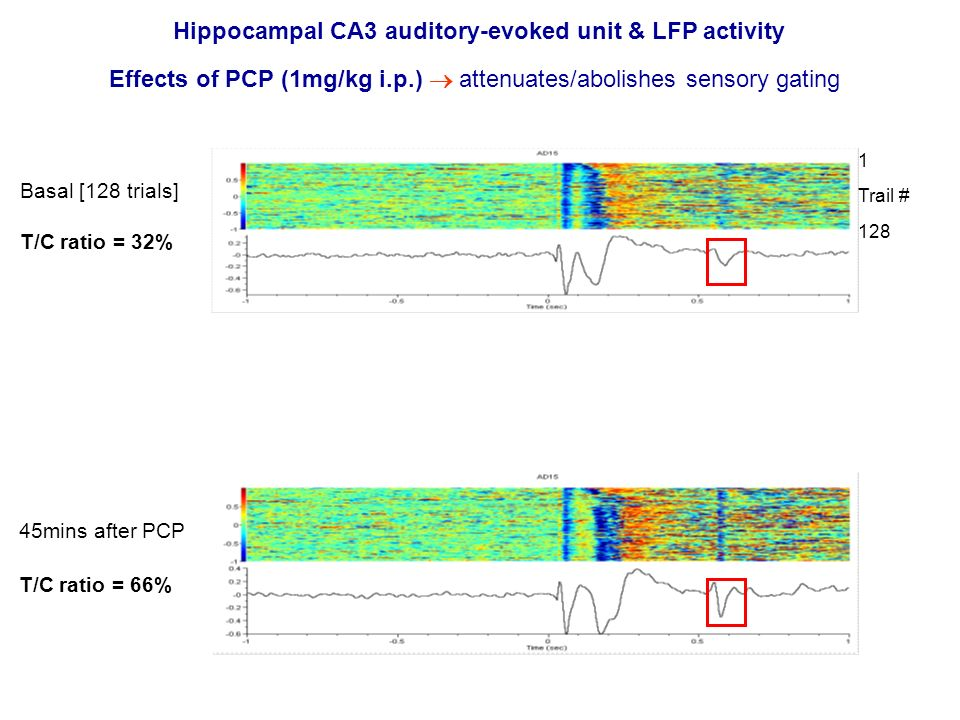 Hippocampal CA3 auditory-evoked unit & LFP activity